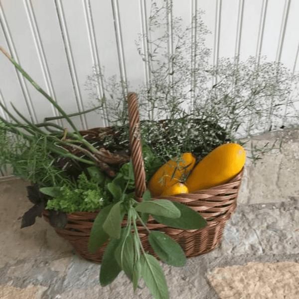 légumes du jardin au gîtes les Pousterles à Brignac dans l'Hérault