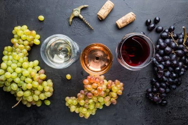Visite de domaines viticoles avec Les Pousterles